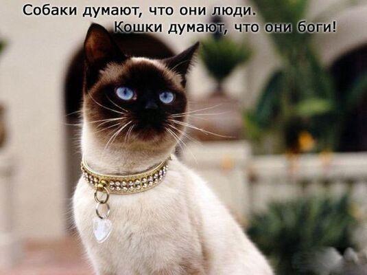 Фото мужчины dfhnj, Краснодар, Россия, 28